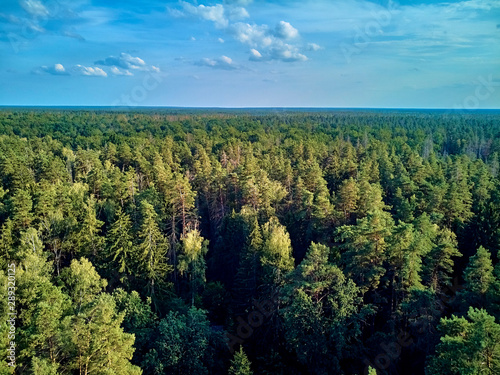 Foto auf Leinwand Blau Beautiful panoramic aerial drone view to Bialowieza Forest - one of the last and largest remaining parts of the immense primeval forest that once stretched across the European Plain