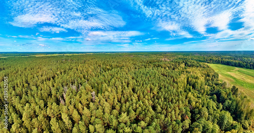 Fototapeta Beautiful panoramic aerial drone view to Bialowieza Forest - one of the last and