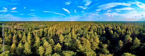 Obraz na plátně Beautiful panoramic aerial drone view to Bialowieza Forest - one of the last and