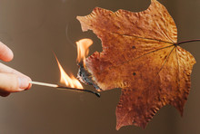 Burning Match And Autumn Maple Leaf. Start Of A Fire. Burning Dry Leaf