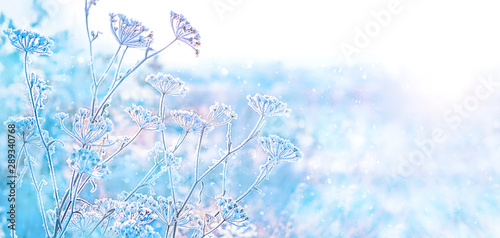 Obraz beautiful winter landscape. frozen grass in frost day. clear frosty weather of winter. winter season background. copy space. soft selective focus - fototapety do salonu
