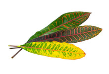 Beautiful Plant Leaf At Isolared White Background C