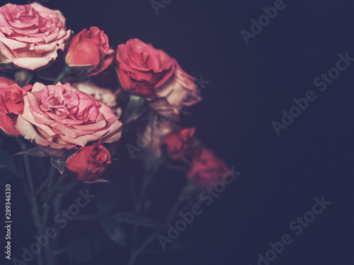 Fototapety, obrazy: A branch of small red and pink roses is on a black background. There is a blank space for text.