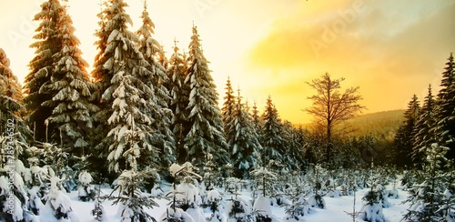 Beautiful scenic winter landscape with the snow covered spruce trees Fototapet