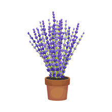 Magnificent Lavender In A Brown Pot. Vector Illustration On A White Background.