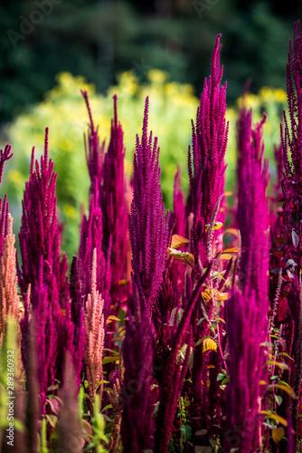 Polne kwiaty na łące - 289360932