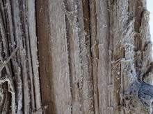 Wood Covered With A Thick Salt...