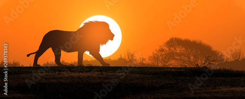 Photo African landscape at sunset with silhouette of a big adult lion