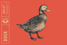 Graphical Drawn Duck. Hand-dra...