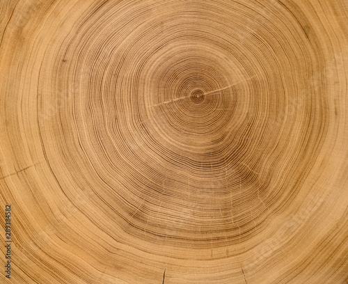 Canvas Print Old wooden oak tree cut surface