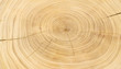 Leinwanddruck Bild Old wooden oak tree cut surface. Detailed warm dark brown and orange tones of a felled tree trunk or stump. Rough organic texture of tree rings with close up of end grain.