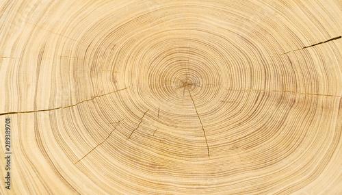 Fotomural  Old wooden oak tree cut surface