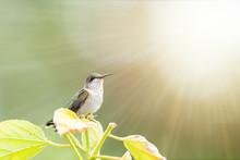 Closeup Of A Hummingbird In The Garden
