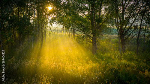 Dawn in the forest, the rays of the sun make their way through the fog, creating great volume in the frame. Concept, peace and meditation.