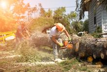 Lumberjack Cutting Tree. Man C...