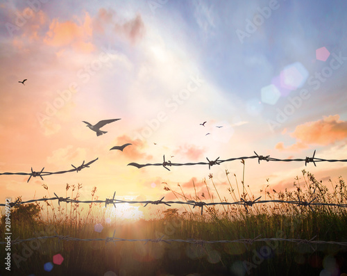 Obraz International migrants day concept: Silhouette of bird flying and barbed wire over autumn sunset background - fototapety do salonu