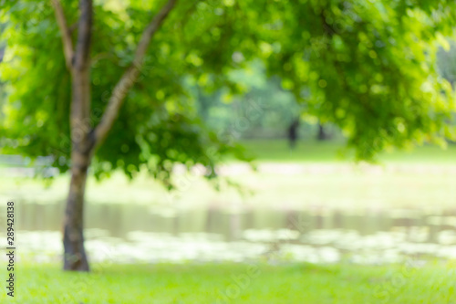 Foto op Aluminium Tuin Blur green tree park outdoor grass field with lake for background