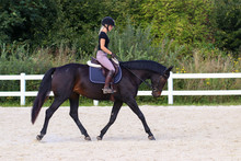 Horse In The Riding Arena In T...