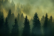 canvas print picture - Incredibly beautiful sunrise in the mountains. Coniferous trees in the fog and the rays of the sun through the foggy forest.