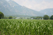 Agricultural water irrigation system on a green corn field on summer in northern Italy