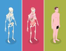Anatomy Isometric Banners Set