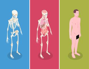 Set anatomskih izometrijskih natpisa