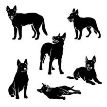 Set Of Australian Cattle Dog S...