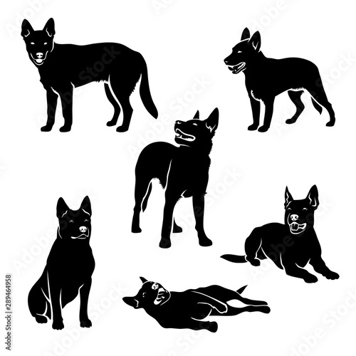 Cuadros en Lienzo Set of Australian cattle dog silhouettes - vector illustration