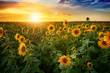 canvas print picture - Beautiful sunset over sunflower field