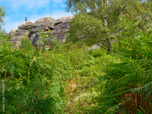 Peering through dense undergrowth to Birchen Edge cliff face and a lone climber Canvas Print