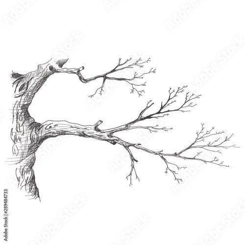 galaz-drzewa-recznie-ryso