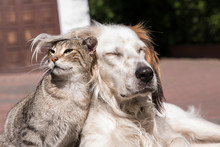 Dog And Cat Friendship, Cat And Dog In Love