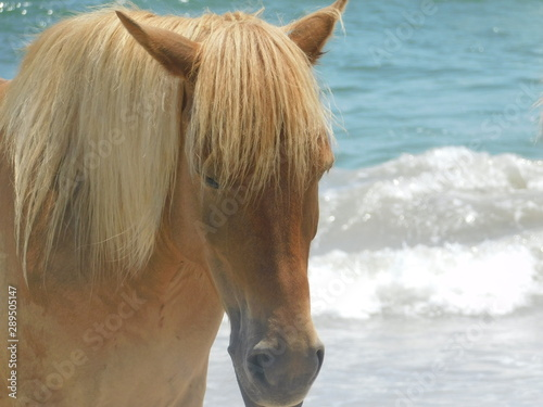 Light Bonde Beach Horse