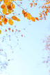 canvas print picture - Herbstlaub als Bordüre