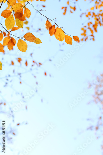 Fototapeta  Herbstlaub als Bordüre