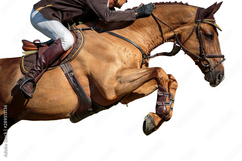 Fototapety, obrazy: Horse Jumping, Equestrian Sports, Isolated on White Background