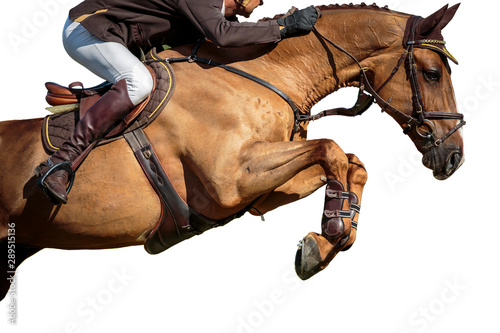 La pose en embrasure Chevaux Horse Jumping, Equestrian Sports, Isolated on White Background