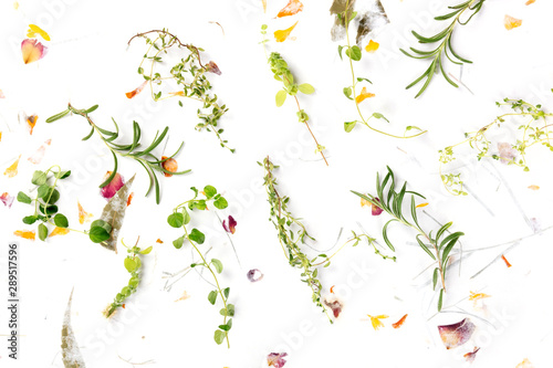 Obraz The herbs of Provence. Rosemary, oregano, thyme, and marjoram, shot from above on a background of dry leaves and petals - fototapety do salonu