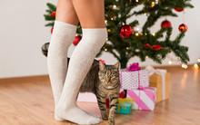 Xmas, Winter Holidays And Cele...