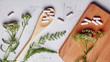 Leinwandbild Motiv Alternative medicine, naturopath and dietary supplement. Herbal remedy in capsules and plants over grey background