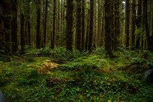 Beautiful Rainforest With Fern On The Ground And Moss On The Trees