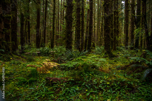 Fotografía  Beautiful rainforest with fern on the ground and moss on the trees