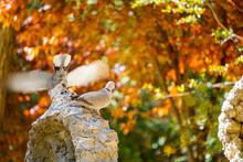Autumn Leaves On Tree With Tur...