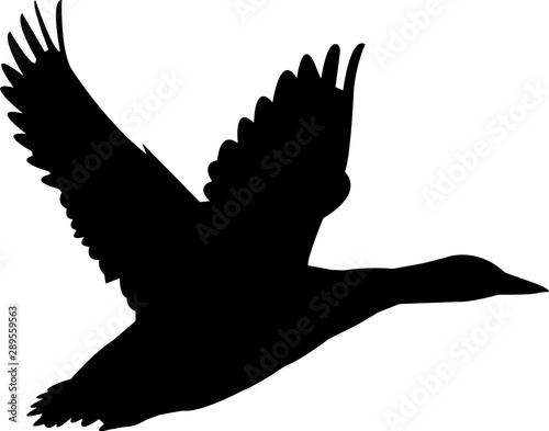 Tablou Canvas Black Duck 2 Vector Silhouette