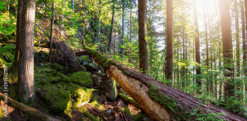 Photo  Beautiful green forest during a sunny summer evening