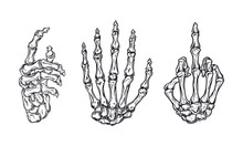 Hand Bones Set Vector Illustra...