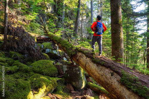 Fotomural  Adventurous Man hiking on a fallen tree in a beautiful green forest during a sunny summer evening
