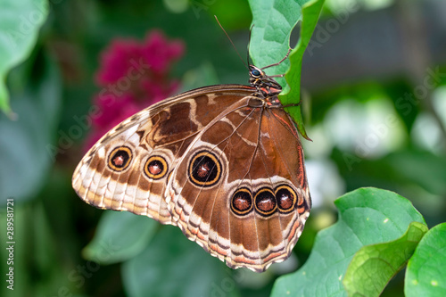 In de dag Vlinder Closeup beautiful butterfly in a summer garden