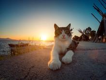 Stray Cat Sitting Near The Lag...