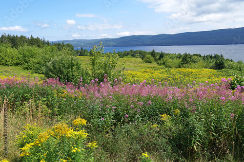 Leinwand Poster Wild flowers on the Cabot Trail, Nova Scotia, beside Bras d'Or Lake